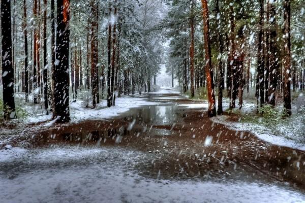 Cae la nieve, sobre los árboles y el camino
