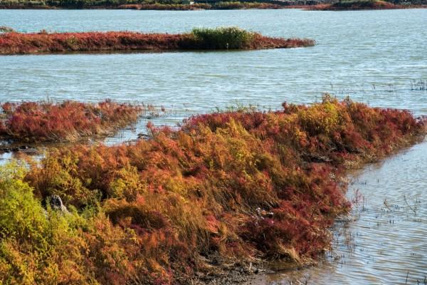 Vegetación otoñal en la ribera del río