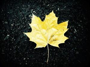 Postal: Hoja amarilla sobre la roca negra