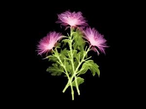 Tres flores luminosas