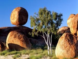 Grandes piedras redondas junto a un árbol