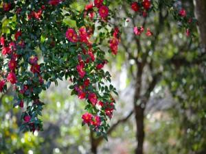 Árbol con bellas flores