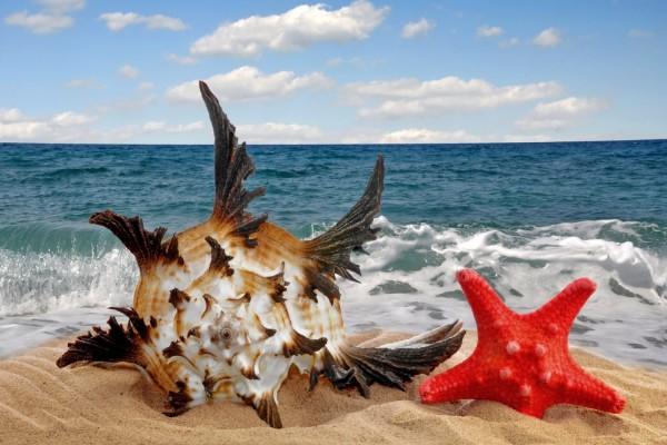 Concha marina y estrella en la arena junto al mar