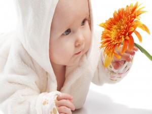 Un bebé observando una gerbera naranja