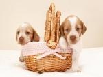 Dos perritos en un canasto de mimbre