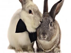 Conejo y coneja preparados para ir a una fiesta