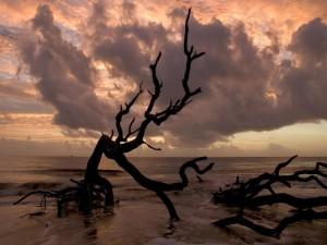 Postal: Árboles en la orilla del mar