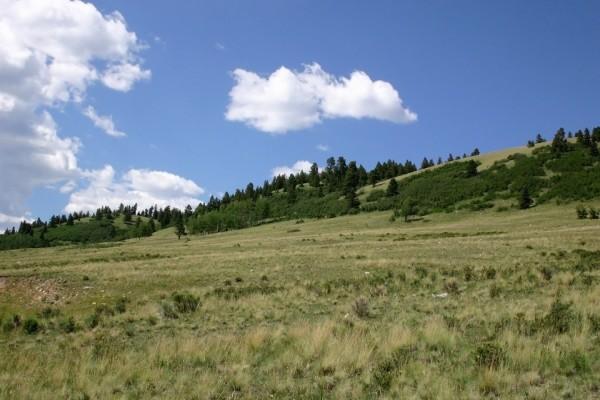 Una pradera verde