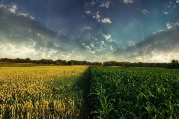 Rayos de sol entre las nubes, sobre un campo cultivado
