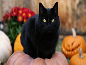Gato negro sobre una calabaza