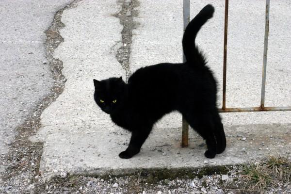 Gato negro callejero con ojos verdes