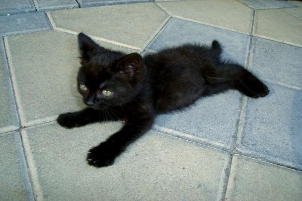 Gatito negro en el suelo