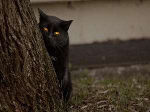 Gato negro vigilando