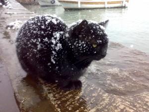 Un triste gato callejero bajo la nieve