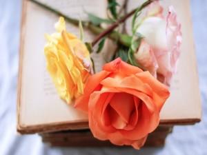 Tres rosas sobre un libro