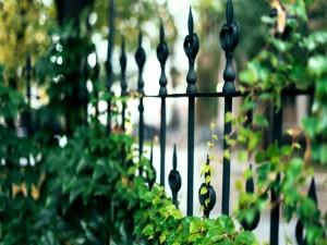 Varillas de hierro con plantas de hojas verdes