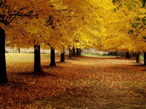 Postal: Naturaleza en otoño