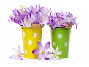 Recipientes con flores
