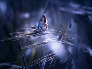 Postal: Mariposa sobre las ramitas