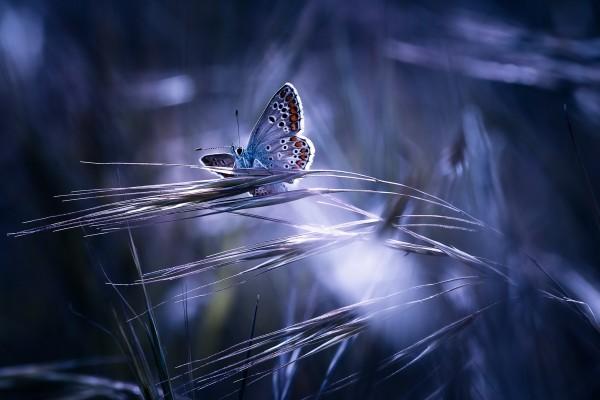 Mariposa sobre las ramitas