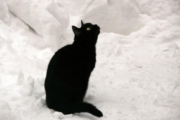 Un gato negro sentado en la nieve