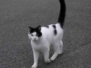 Gato blanco y negro en la calle