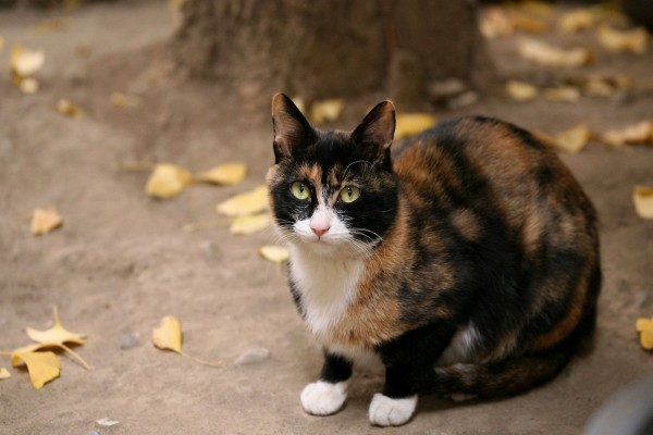 Gato con varios colores