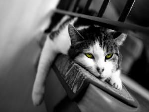 Postal: Un gato cansado