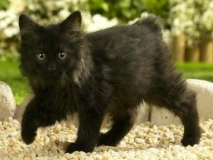 Postal: Gatito negro en las piedras
