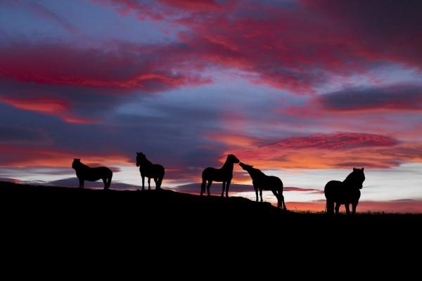 Caballos en las montañas al anochecer
