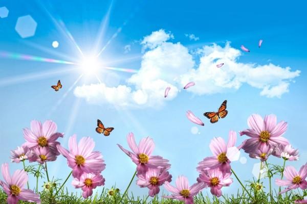 Hermoso amanecer entre flores y mariposas