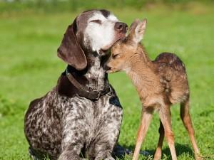 Lindo cachorro cariñoso junto a un venado bebé