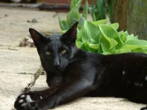Gato negro tumbado junto a las plantas