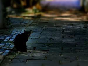 Gato en la calle al anochecer