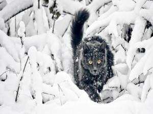 Postal: Precioso gato entre las ramas nevadas