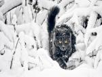 Precioso gato entre las ramas nevadas