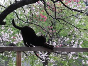 Postal: Gato estirándose en la barandilla de madera