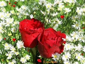 """Flores y """"Te Quiero Mamá"""""""