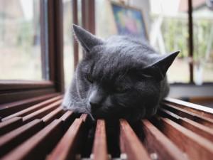 Gato dormido junto a la ventana