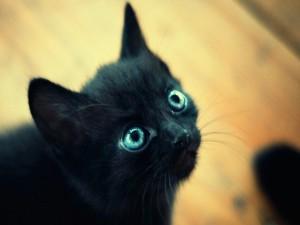 Postal: Gatito negro de ojos azules