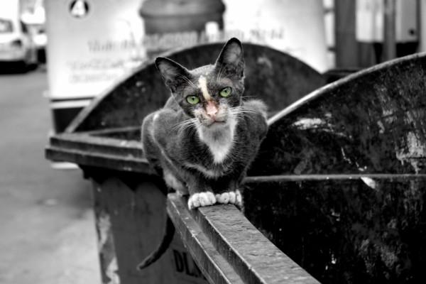 Foto a un gato callejero