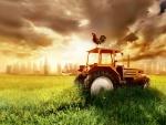Gallo sobre un tractor