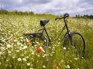 Postal: Una bicicleta entre las flores
