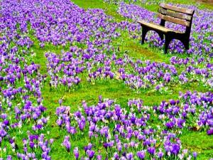 Postal: Un banco rodeado de pequeñas flores