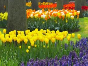 Jardín con tulipanes y árboles