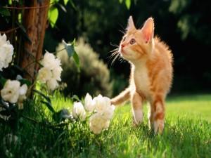 Un gato curioso en el jardín