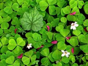 Hojas verdes y algunas flores