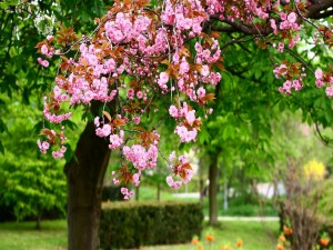 Árbol florecido