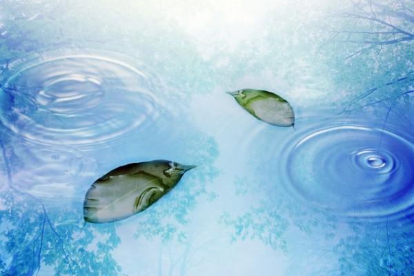 Hojas en la superficie del agua