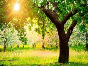 Árboles y el sol en el campo